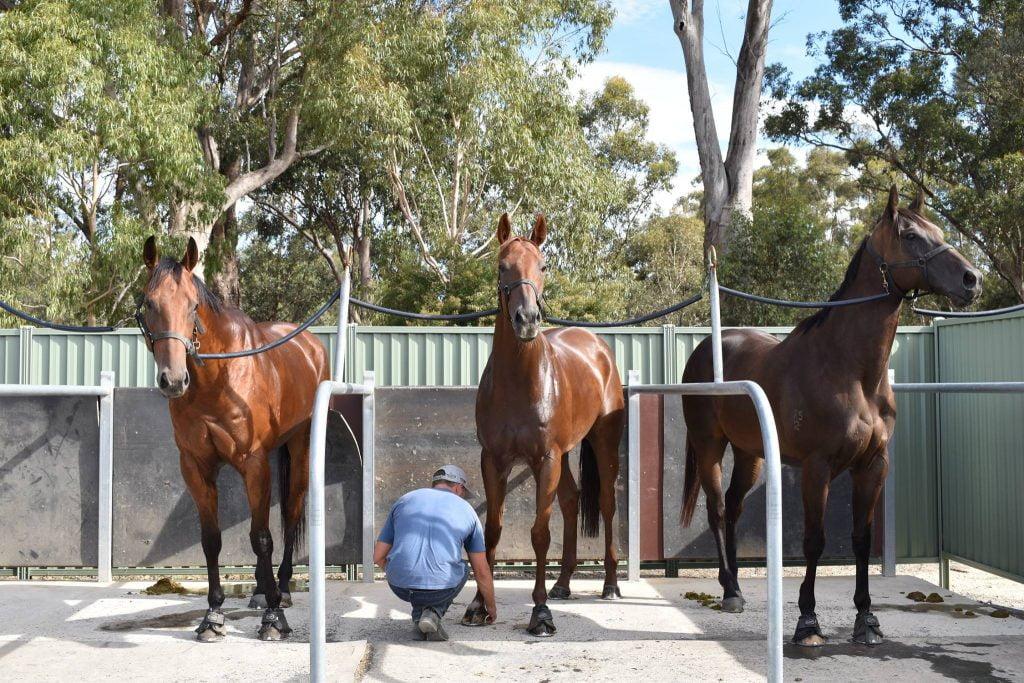 Three racehorses