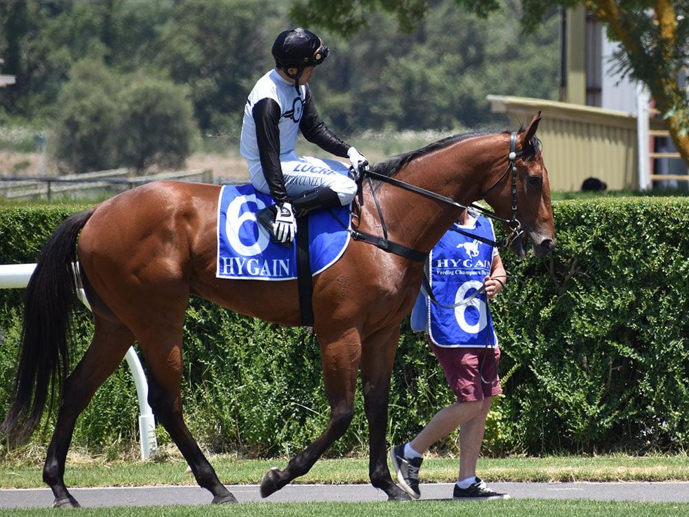 Jockey on horse in mounting yard